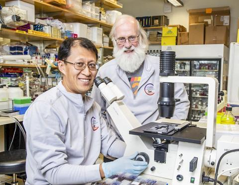 연구를 수행한 유 쉬 연구원(왼쪽)과 토니 헌터 교수 CREDIT: Salk Institute
