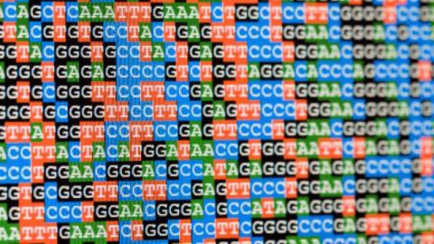 '유전자 다양성'의 중요성이 강조되면서 소수민족의 유전자 뿌리를 찾기 위한 연구가 활발하게 이루어지고 있다.