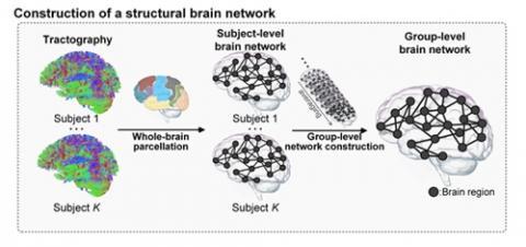 KAIST 조광현 교수 연구팀이 구축한 뇌 영역 간 네트워크. 미국국립보건원 휴먼 커넥톰 프로젝트에서 제공하는 뇌영상 이미지 데이터를 활용해 그려냈다. ⓒ KAIST