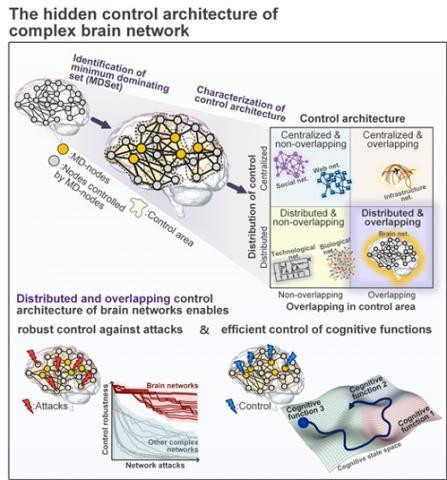 뇌 영역 사이 연결성에 내재된 뇌의 제어구조 설명도  ⓒ KAIST