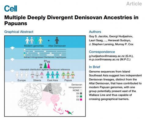 '셀'(Cell)지 11일자에 게재된 데니소바인 관련 연구에 대한 그래픽 요약. ⓒ Cell Press
