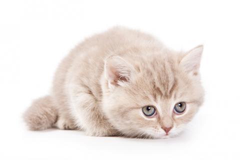 이름을 불러도 못들은 척 하는 고양이가 사실은 자기 이름과 다른 말을 분간하는 능력이 있다는 연구결과가 나왔다. ⓒ 게티이미지