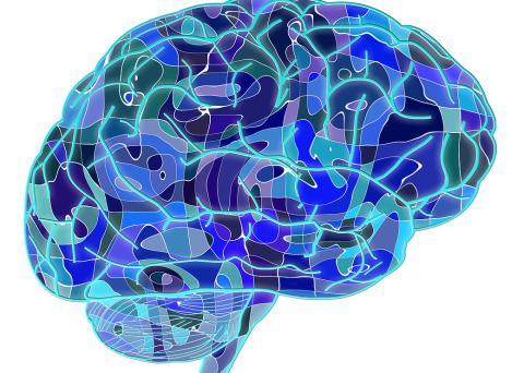 최근 보스톤대 뇌과학자들이 전기적 뇌자극(EBS)을 통해 기억력을 되살리는 치료법을 개발해 성공을 거두고 있다.  특히 건망증으로 인해    ⓒUniversity of Bordeaux