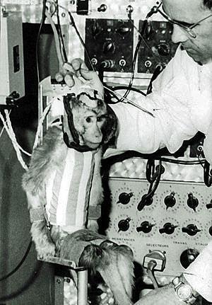 최초로 우주에 간 영장류 앨버트 2세 ⓒNASA