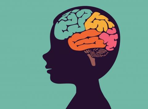 영장류 실험을 통해 청소년기 지속적인 음주가 뇌세포 성장을 억제하고 알코올중독으로 이어질 수 있다는 연구 결 ⓒknowwhenknowhow.org