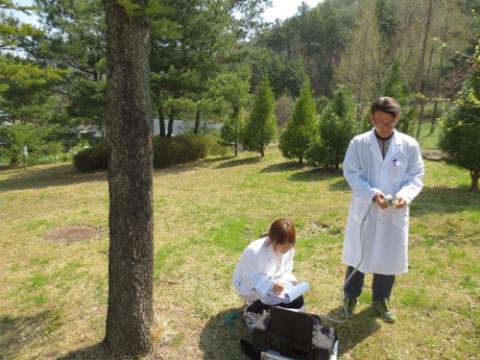 국내에서 최초로 제1회 나무의사 자격시험이 시행되었다 Ⓒ 연합뉴스
