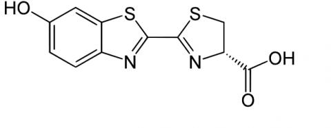 개똥벌레 분자구조