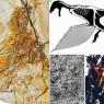 공룡은 어떻게 새가 되었을까?