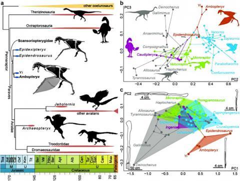 중생대 실루로사우리아의 분기도와 문형공간(phylomorphospace) CREDIT: WANG Min