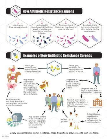 항생제 내성이 어떻게 진화하고 확산되는지를 나타낸 그림.  Credit: Wikimedia /CDC