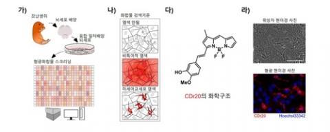 미세 아교세포 특이적인 형광체 CDr20 선별 원리 ⓒ 기초과학연구원