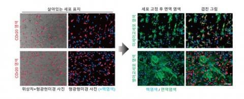연구진은 살아있는 일차배양 뇌세포에 염색된 CDr20 사진을 찍은 뒤 미세 아교세포 면역염색 결과와 대조했다. 그 결과 CDr20이 미세 아교세포만을 특이하게 염색한다는 사실을 확인했다. ⓒ 기초과학연구원