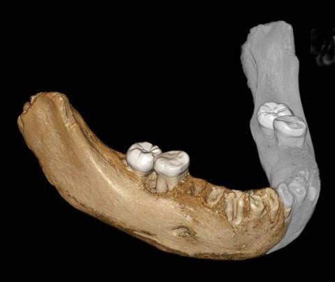 부착된 탄산염 표층을 제거한 뒤 가상으로 복원한 턱뼈 모습.  CREDIT: Dongju Zhang, Lanzhou University