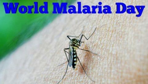 4월 25일은 세계보건기구가 정한 '세계 말라리아의 날'이다 wikipedia