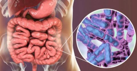 장내 미생물을 통해 자폐증 및 비만 등을 치료하려는 연구가 추진되고 있다 Ⓒ scientist-magazine