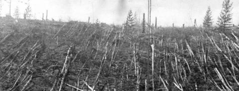 시베리아 퉁구스카 유역 상공에서 폭발한 소행성은 약 8,000만 그루의 나무들을 쓰러지게 만들었다. ⓒ한국천문연구원