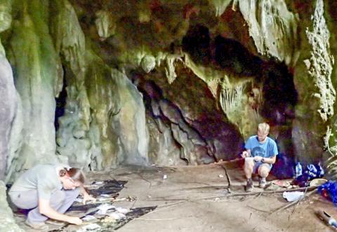 CABAH 연구원들이 세람(Seram) 섬, 니웰레후(Niwelehu) 마을 근처 라투마쿨리타(Latumakulita) 동굴의 첫 번째 방 내부를 조사하는 모습.   Credit: CABAH