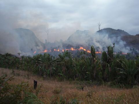 자연 생태계의 보고인 마다가스카르 열대우림이 최근 빠른 속도로 훼손되면서 그동안 연구를 진행해온 과학자들이 '이바토 선언문'을 채택하고 국제사회에 자연보존을 위한 조치를 강구할 계회기다. 사진은 불타고 있는 수풀. ⓒWikipedia
