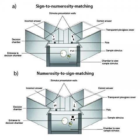 꿀벌을 훈련하고 테스트하기 위해 사용한 실험 환경 세부 모습. CREDIT: RMIT University