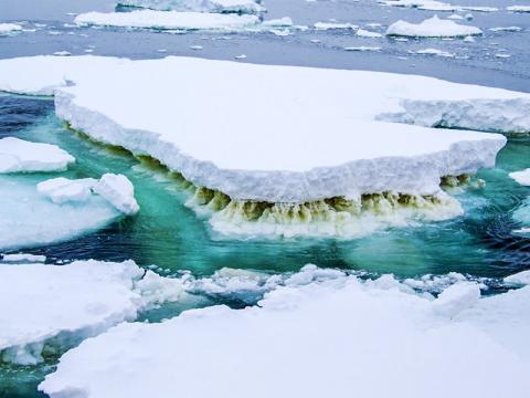 얼음 조류(藻類)의 갈색 층이 보이는 남극의 바다 얼음. 바다 얼음에 서식하는 이 미생물은 해양 먹이사슬 시스템의 시작이다. 기후변화로 바다 얼음이 녹으면 그 연쇄반응으로 식량자원이 감소돼 바다 생물들이 굶주리게 된다.  CREDIT: Rick Cavicchioli, UNSW Sydney