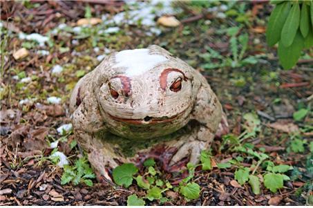 캐나다 숲개구리 ⓒ Pixabay