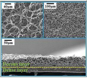 실리콘화합물 스펀지의 현미경 사진  ⓒ KIST