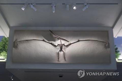 스미스소니언 자연사박물관에 전시된 익룡 화석  ⓒ AP/ 연합뉴스