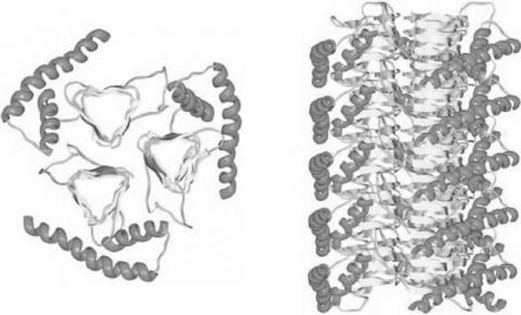 광우병과 변형크로이츠펠트야콥병(vCJD)의 원인으로 추정되는 변형 프리온 단백질 ⓒ Kupfer, L