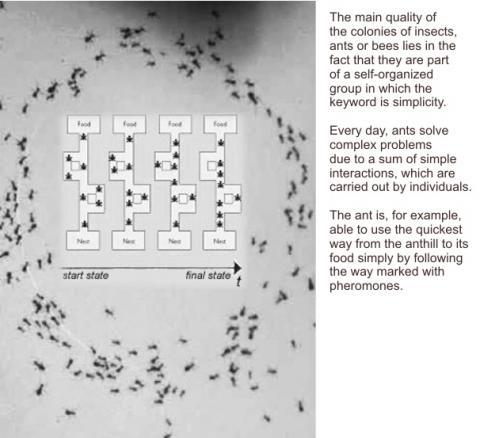 군집지능 구현을 위한 인공개미들 ⓒ 위키미디어