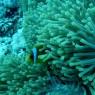 산호초 멸종 막을 '슈퍼 산호' 발견