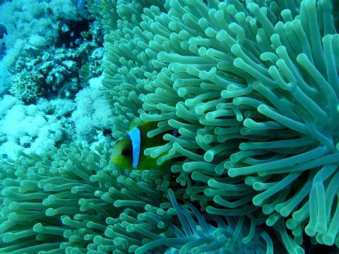 전 세계의 죽어가는 산호초들을 살리기 위한 새로운 연구들이 진행되고 있어 주목을 끈다. (사진은 기사 중의 특정 사실과 관련이 없음) Image by Andreas Schau from Pixabay