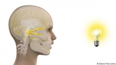 과학자들은 에취(ACHOO) 증후군이 눈과 코로 연결된 삼차 신경에서 반사가 잘못 일어난 것으로 설명한다.  ⓒScience Photo Library