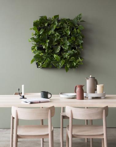 식물벽 ⓒ Skogluft