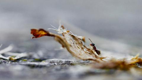 영국 에든버러대학 연구진은 사막개미들이 길을 어떻게 찾는지 알 수 있는 정교한 컴퓨터 모델을 개발했다고 밝혔다. ⓒ Christian Lischka, unsplash.