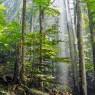 삼림 복원이 기후변화에 대한 가장 효율적인 해결책이란 연구가 나왔다. 사진은 몬테네그로의 비오그라드스카 숲의 모습.
