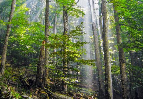 삼림 복원이 기후변화에 대한 가장 효율적인 해결책이란 연구가 나왔다. 사진은 몬테네그로의 비오그라드스카 숲의 모습. CREDIT: Wikimedia /Snežana Trifunović