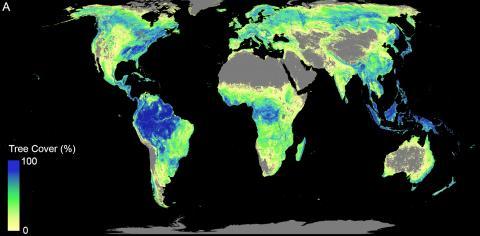 전 세계에 걸쳐 나무가 자랄 수 있는 모든 가용 토지가 있는 지역. 현재 삼림이 있는 지역과 복원에 사용할 수 있는 면적을 합한 것이다.   CREDIT: ETH Zurich / Crowther Lab