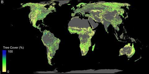 삼림 복구에 사용할 수 있는 가용 토지. 사막과 농경지 및 도시지역은 제외하고 현재 삼림이 있는 곳은 표시하지 않았다.  CREDIT: ETH Zurich / Crowther Lab
