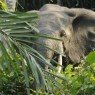 '둥근귀코끼리'가 지구를 살린다