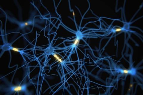 동물 실험을 통해 하던 행동을 포기하게 하는 신경전달물질이 어떻게 생성되는지 그 메커니즘이 밝혀졌다. 향후 우울증, 조현병 등의 치료제 개발에 도움을 줄 수 있을 것으로 기대되고 있다. ⓒMIT