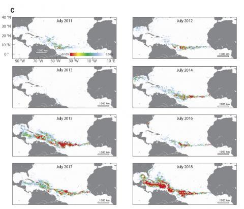 연구진은 모자반이 최고조를 이루는 매년 7월마다 대서양에서 거대 모자반의 밀도를 표시한 위성사진 이미지를 공개했다. ⓒ '사이언스(Science)'