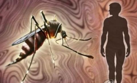 모기만을 선별하여 죽이는 살충제가 개발되고 있어 주목을 끌고 있다 ⓒ 연합뉴스
