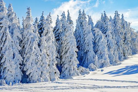 시베리아와 같은 북부 아한대 숲 지역은 지구 온난화에 따라 삼림 면적이 증가할 것을 예상되나, 열대우림에서의 기후온난화에 따른 손실에 비하면 과대평가됐다는 지적이다.   CREDIT: Wikimedia
