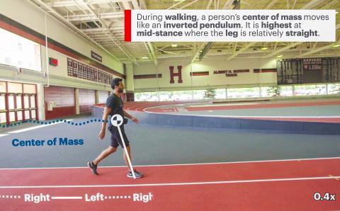 1.걸을 때 보행자의 무게 중심은 올라갔다 되돌아오는 시계 추처럼 움직인다. 무게 중심은 무릎이 상대적으로 곧바로 선 중간 스탠스에서 가장 높이 위치해 있다.  Credit: Wyss Institute at Harvard University