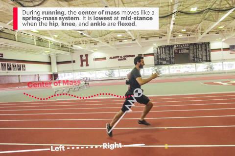 2.달릴 때의 무게 중심은 스프링 질량계처럼 움직인다. 엉덩이와 무릎, 발목이 모두 풀어진 중간 스탠스에서 가장 낮다.  Credit: Wyss Institute at Harvard University