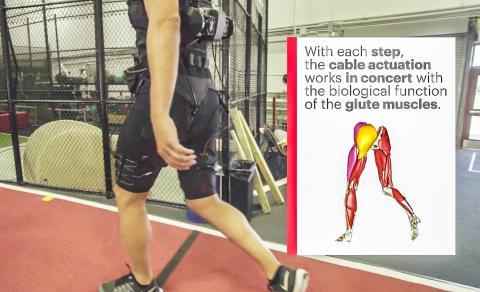 4.걸음을 걸을 때마다 케이블 구동력이 엉덩이 근육의 생물학적 기능과 조화를 이뤄 작동한다.  Credit: Wyss Institute at Harvard University