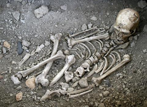 네안데르탈인의 화석 ⓒ  120 / V.Mourre