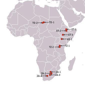 아프리카에서 오스트랄로피테쿠스의 화석이 발견된지역들 ⓒ 위키미디어
