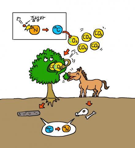 대기에서 생물 잔해까지 탄소14의 흐름. 탄소14의 비율은 대기와 생물체 내에서 일정하지만, 죽은 생물체 안에서는 그 비율이 변한다 ⓒ윤상석