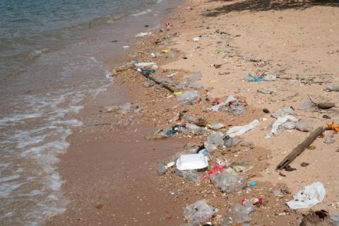 플라스틱, 세정제 등의 과도한 사용으로 인해 생태계가 손상되고 있다.  ⓒ 게티이미지